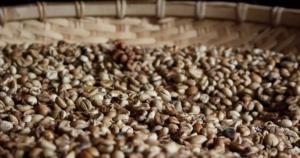ナチュラルとウォッシュトの違いは?コーヒーの精製方法を徹底解説