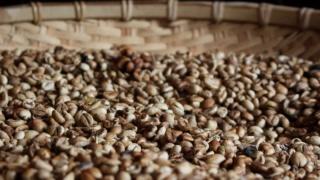コーヒーの精製とは ナチュラル、ウォッシュトの違い